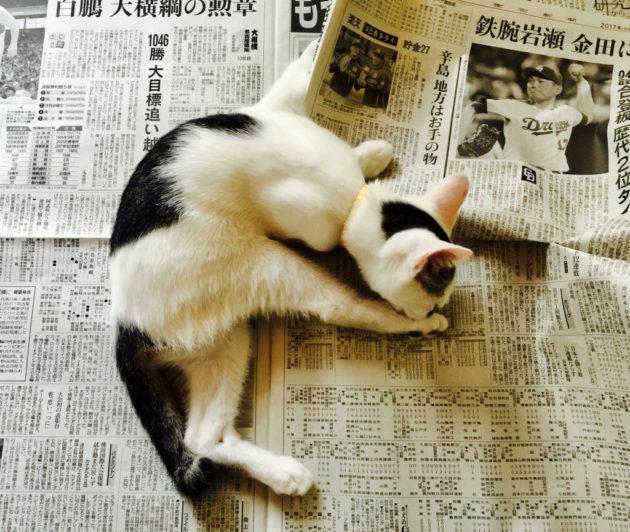 新聞にネコ